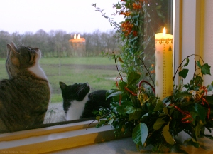 Cats Observe Advent Calendar Candle